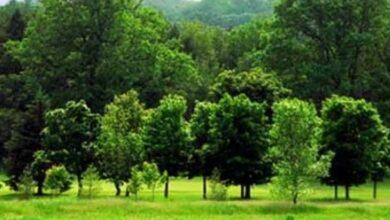 Photo of वन विभाग हिमाचल प्रदेश ने पूरे राज्य में रखा1.4करोड़ पौधे लगाने का लक्ष्य